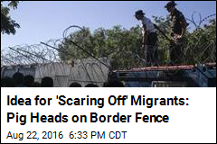 Idea for 'Scaring Off' Migrants: Pig Heads on Border Fence