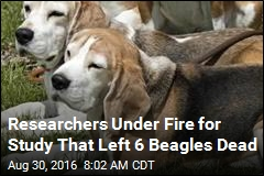 Researchers Under Fire for Study That Left 6 Beagles Dead