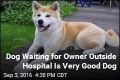 Loyal Dog Waits Days Outside Hospital for Owner