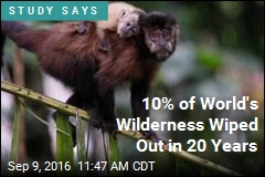 10% of World's Wilderness Wiped Out in 20 Years