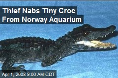 Thief Nabs Tiny Croc From Norway Aquarium