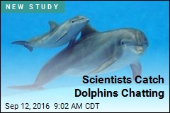 Scientists Catch Dolphins Chatting