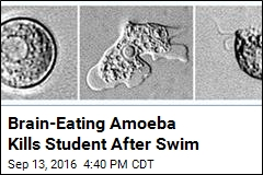 Brain-Eating Amoeba Kills Student After Swim