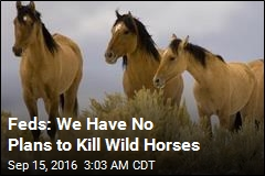 Feds: We Have No Plans to Kill Wild Horses
