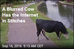 A Blurred Cow Has the Internet in Stitches