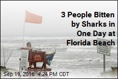3 People Bitten by Sharks in One Day at Florida Beach