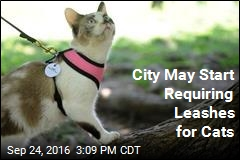 Alaska City to Vote on Cat Leash Law