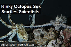 Kinky Octopus Sex Startles Scientists