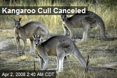 Kangaroo Cull Canceled