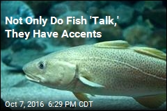 Not Only Do Fish 'Talk,' They Have Accents
