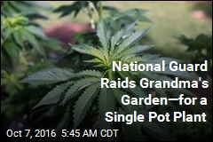 National Guard Raid Grandma's Garden for Single Pot Plant