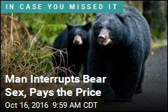 Man Interrupts Bear Sex, Pays the Price