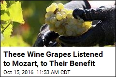 The Grapes in This Wine Were Serenaded With Mozart