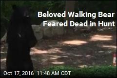 Beloved Walking Bear Feared Dead in Hunt