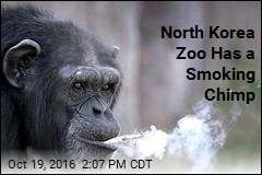 North Korea Zoo Has a Smoking Chimp