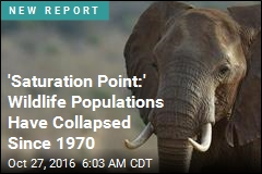 'Saturation Point:' Wildlife Populations Have Collapsed Since 1970