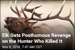 Hunter Kills Elk, Proceeds to Impale Self on Antler