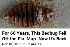 Bedbug Not Seen in Florida Since WWII Is Back