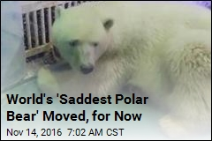 World's 'Saddest Polar Bear' Moved, for Now
