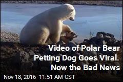 Viral Video of Polar Bear Petting Dog Has Unfortunate Update
