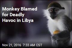 Monkey Blamed for Deadly Havoc in Libya