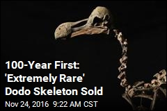 100-Year First: 'Extremely Rare' Dodo Skeleton Sold