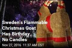 Sweden's Flammable Christmas Goat Has Birthday, No Candles