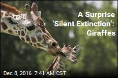 'Devastating Decline' in Giraffes Over 30 Years: Report