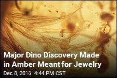 Scientists Find Dinosaur Tail Preserved in Amber