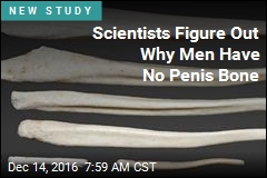 Scientists Figure Out Why Men Have No Penis Bone