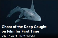 Ghost of the Deep Caught on Film for First Time