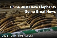 China Announces 'Historic' Ivory Ban