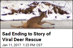 Hundreds of Thousands Watch Hours-Long Deer Rescue