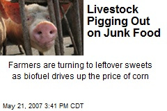 Livestock Pigging Out on Junk Food