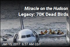 Miracle on the Hudson Legacy: 70K Dead Birds