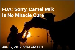 FDA: Sorry, Camel Milk Is No Miracle Cure