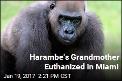 Harambe's Grandmother Euthanized in Miami