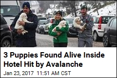 3 Puppies Found Alive Inside Hotel Hit by Avalanche