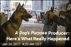 A Dog's Purpose Producer: Here's What Really Happened