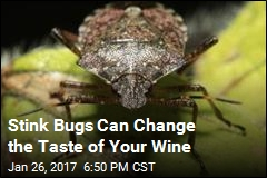 Stink Bugs Can Change the Taste of Your Wine
