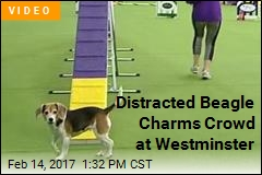 There's a Crowd Favorite at Westminster