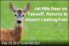 Jet Hits Deer on Takeoff, Returns to Airport Leaking Fuel