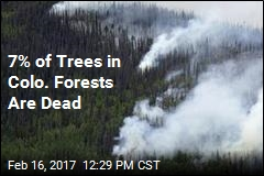 7% of Trees in Colo. Forests Are Dead