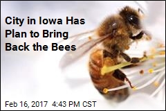 Iowa City Has Plan to Bring Back the Bees