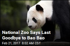 A Goodbye for Bao Bao: Cub Heads to China