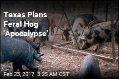 Texas Plans 'Feral Hog Apocalypse'