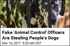 Bogus 'Animal Control' Stealing Dogs in Illinois