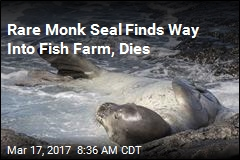 Endangered Monk Seal Dies in Fish Farm Net