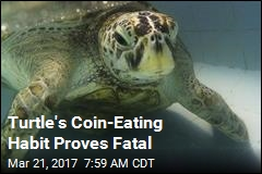 Coins Thrown for Good Luck End Up Killing Turtle