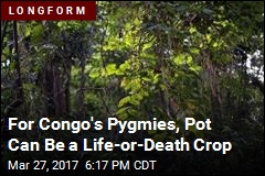 Congo's Pygmies Are Selling Pot to Survive